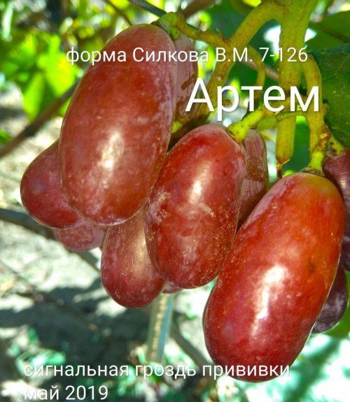 Раннесредние сорта винограда