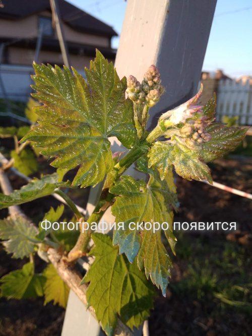 Препараты для защиты растений и удобрения